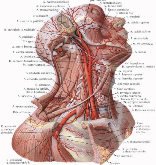 a vagus ideg magas vérnyomása