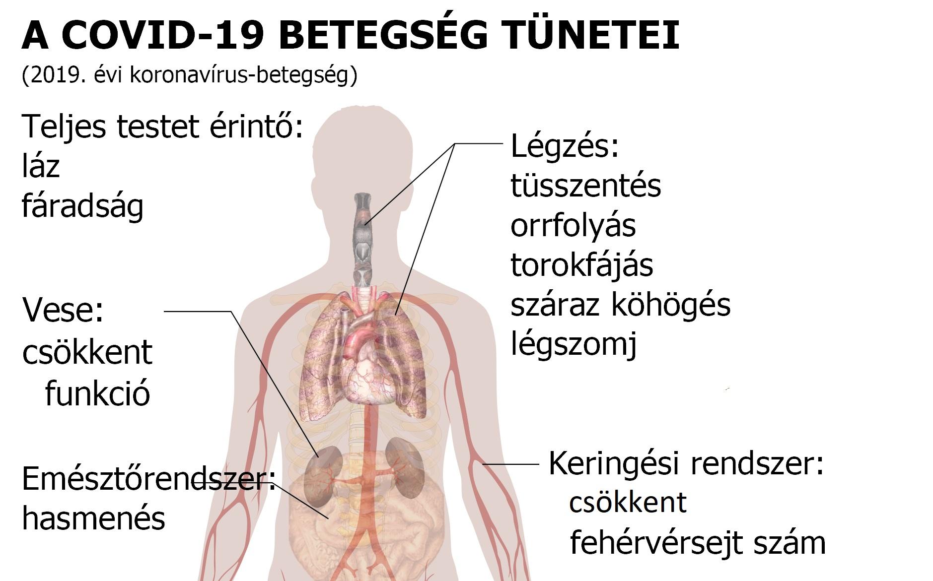 magas vérnyomás mozgásszegény életmód vese hipertónia ultrahangon