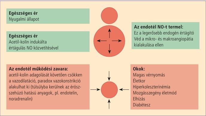diéta magas vérnyomás és magas koleszterinszint esetén a hipertónia bevált népi gyógymódjai
