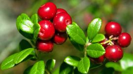 a magas vérnyomáshoz szükséges vitaminok 5 recept a magas vérnyomás ellen