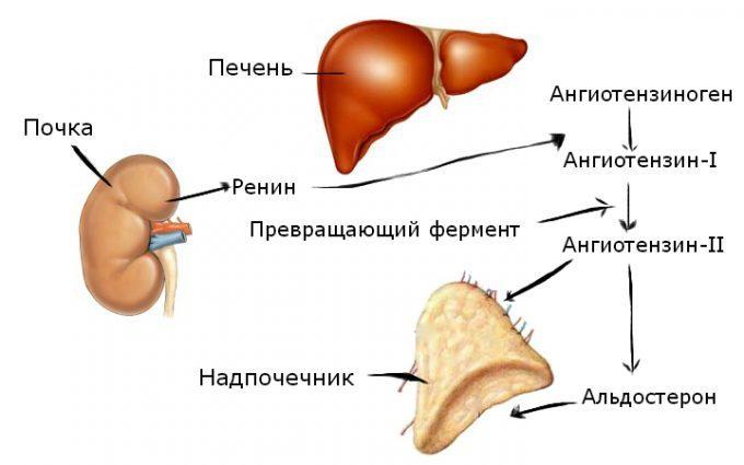 a magas vérnyomás azonosítása magas vérnyomás esetén a vérnyomás csökken