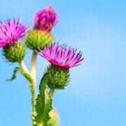 magas vérnyomás 2 fok a menopauzától
