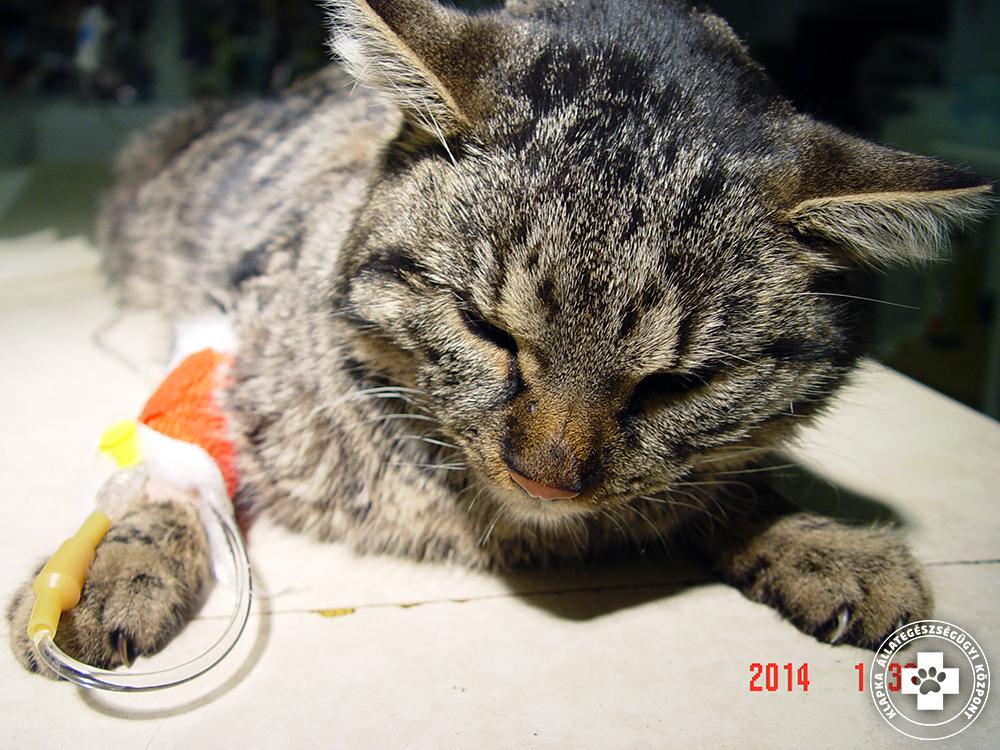macska magas vérnyomás kezelés alatt áll magas vérnyomás hogyan lehet elkerülni