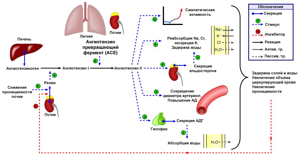 a magas vérnyomás hagyományos gyógyszere magas vérnyomás és intim élet