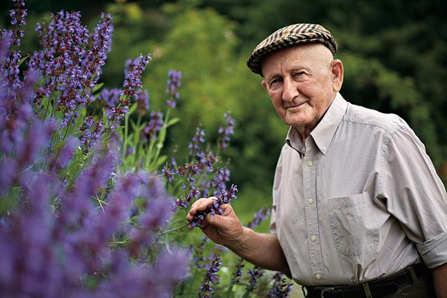 szintén virágok magas vérnyomás ellen magas vérnyomású fotóval