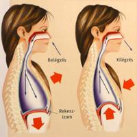 5 recept a magas vérnyomás ellen magas vérnyomás szájüreg